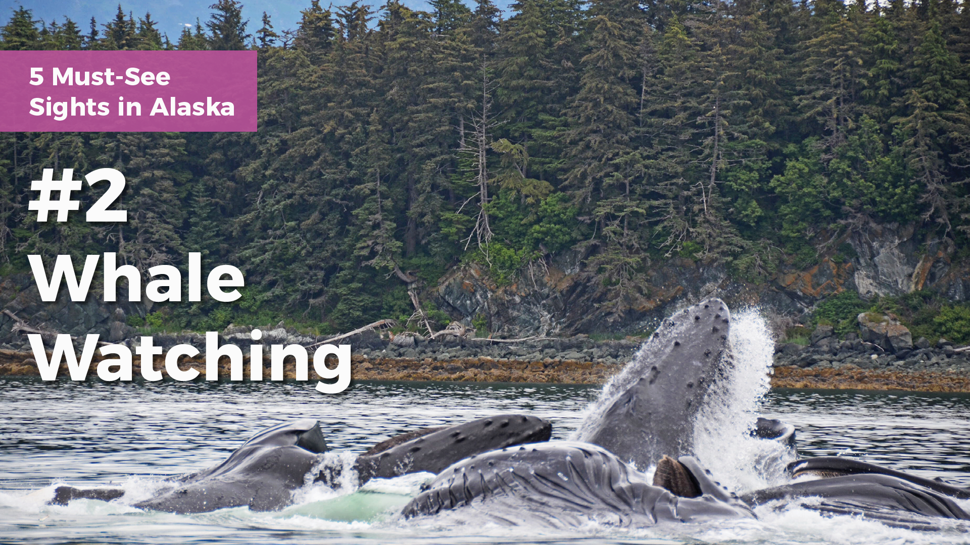 5-must-see-sights-in-alaska-whale-watching